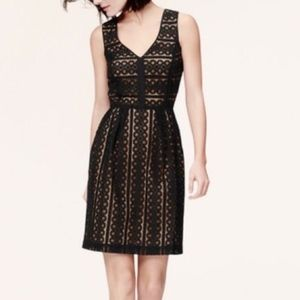LOFT Geo Striped Lace Eyelet Black Mini Dress